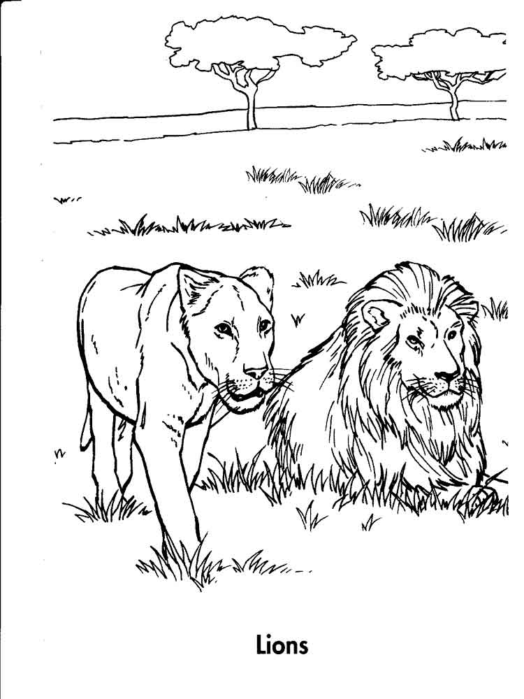 Lion coloring pages. Download and print lion coloring pages