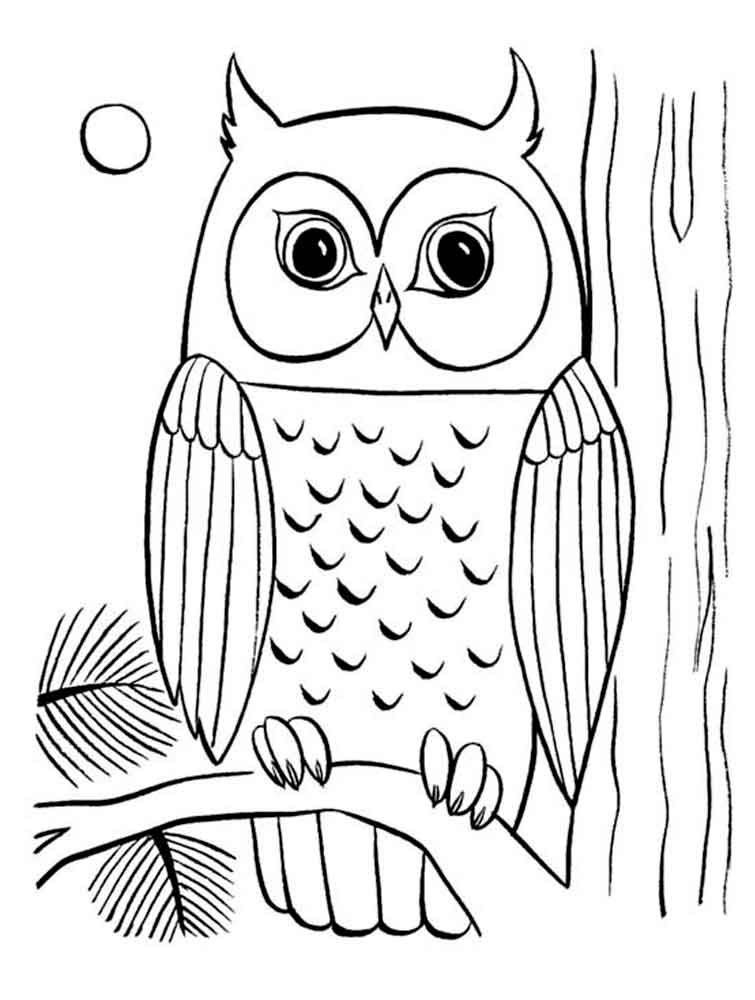 coloring pages animals owl 10