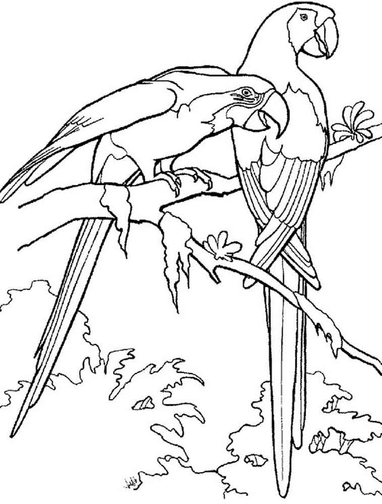 Parrot coloring pages download and print parrot coloring for Coloring pages parrot