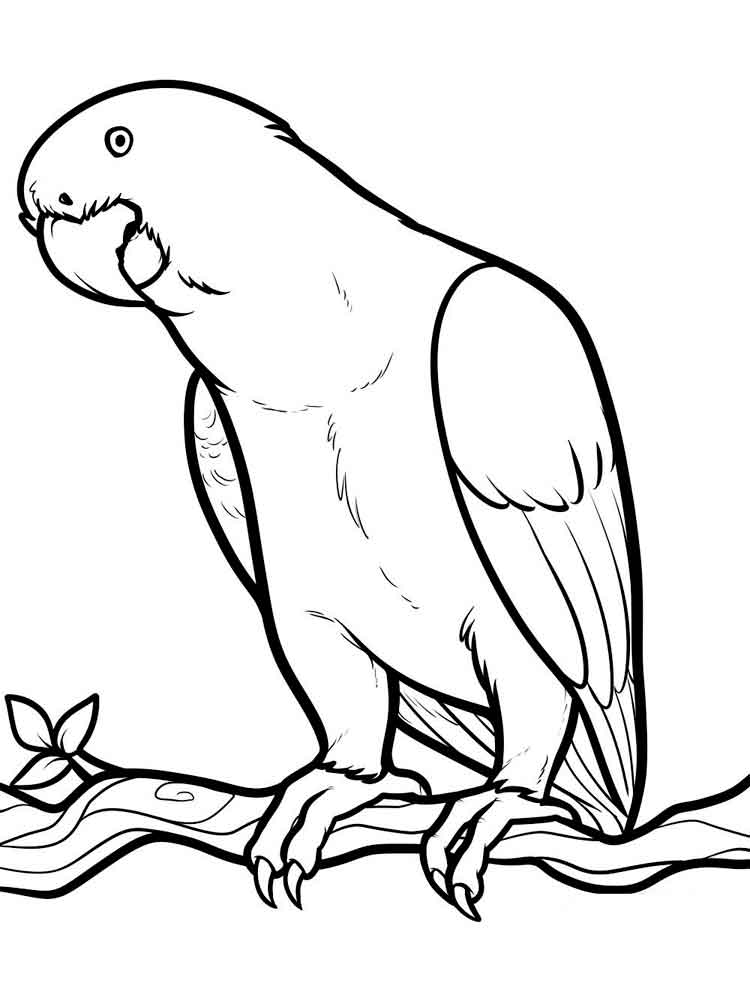 Parrot coloring pages Download
