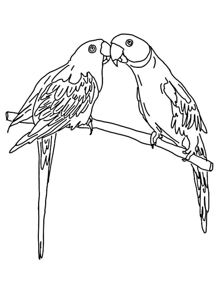 parakeet coloring pages - parrot coloring pages download and print parrot coloring