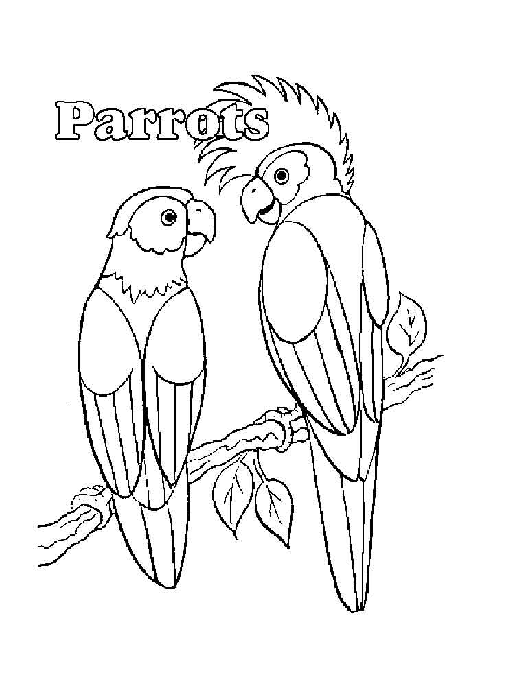 parrot coloring pages and print parrot coloring pages  coloring pages animals parrot 8
