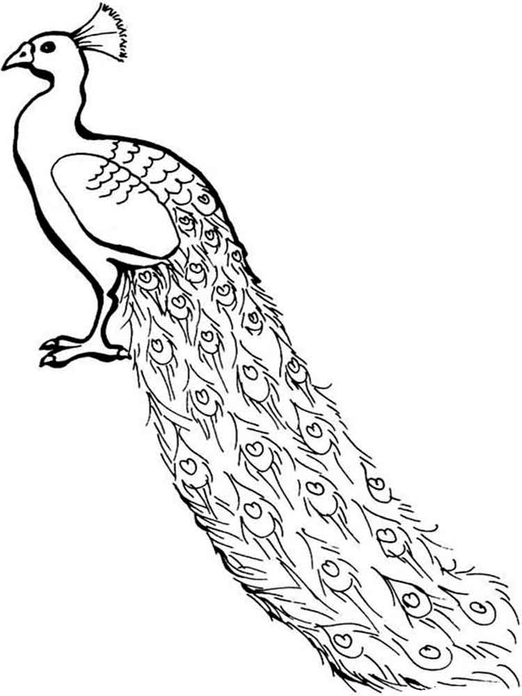 Coloring Pages Animals Peacock 1
