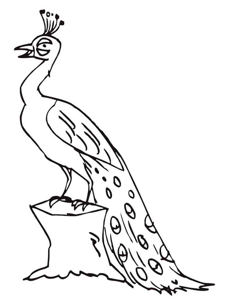 peacock coloring pages  download and print peacock