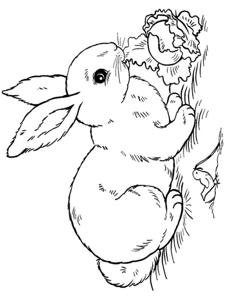 Rabbits coloring pages Download