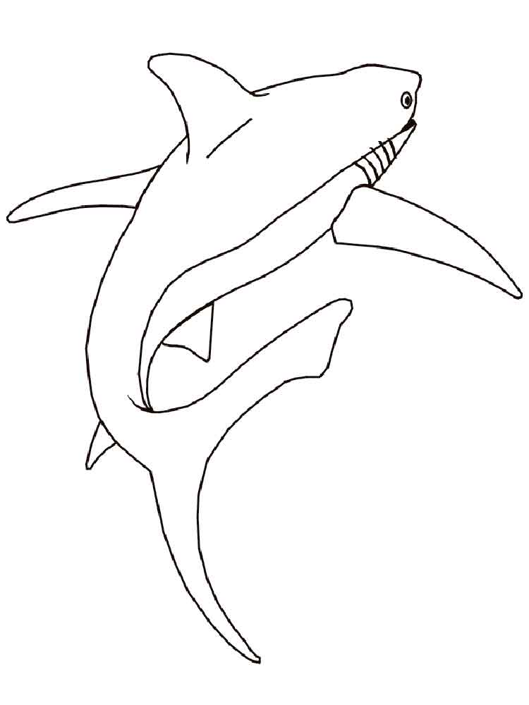 Sharks coloring pages Download
