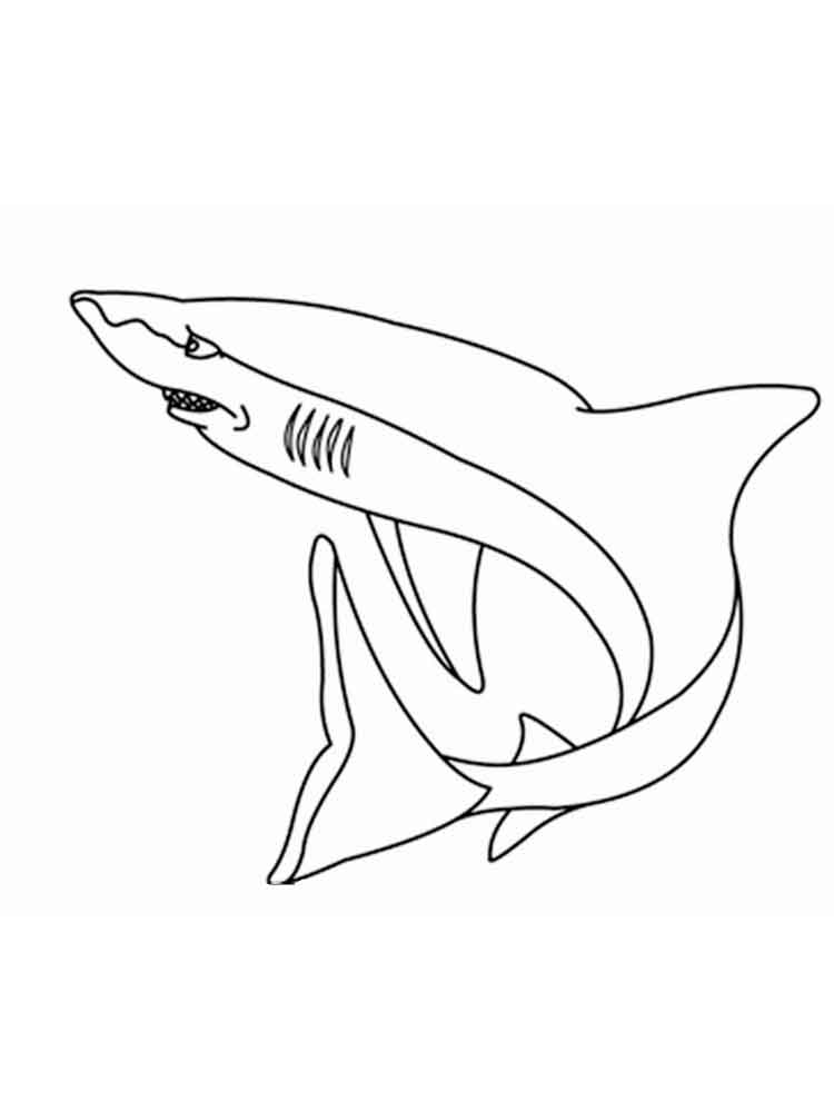 Sharks coloring pages Download and print sharks coloring pages