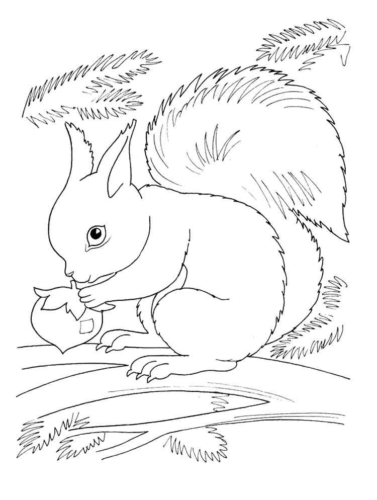 Squirrel coloring pages Download and print squirrel coloring pages