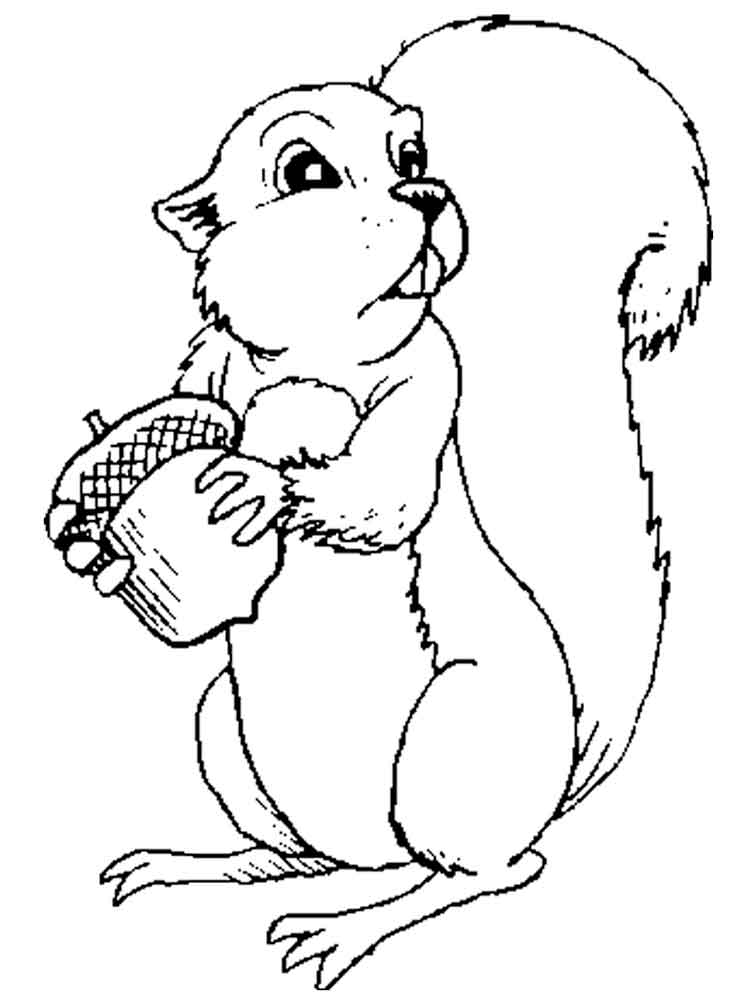 squirrel coloring pages for kids - squirrel coloring pages download and print squirrel