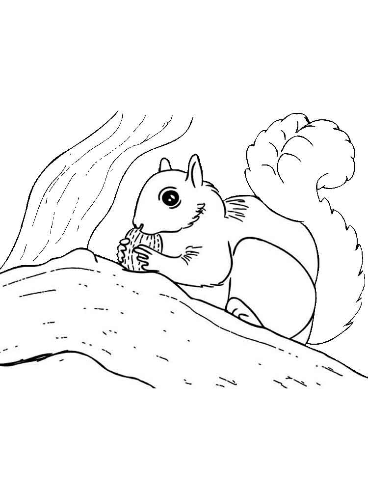 Squirrel Monkey Coloring Pages