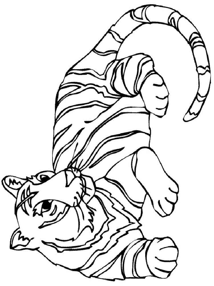Tigers coloring pages download and print tigers coloring for Coloring pages of tiger
