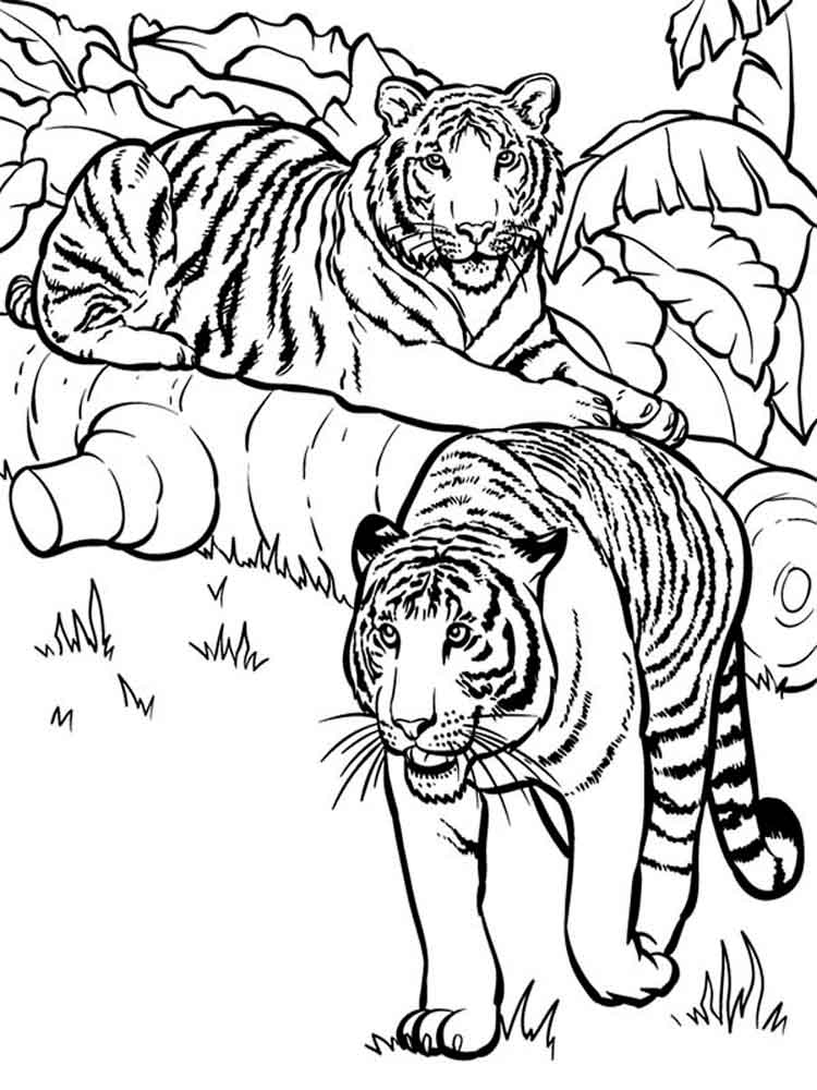 Beautiful Tiger Coloring Pages Gallery New Printable Coloring
