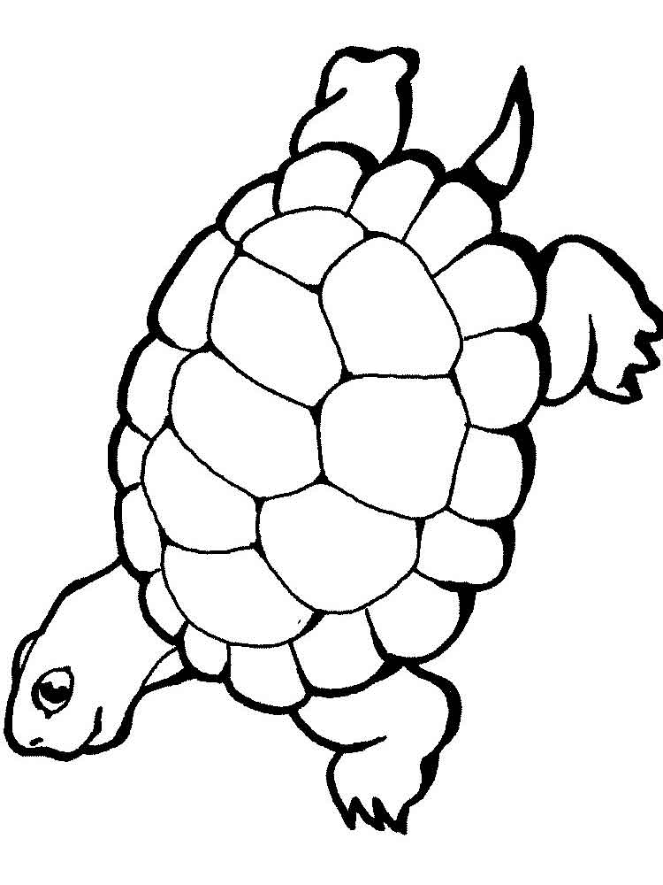 Coloring Pages Animals Turtles 3