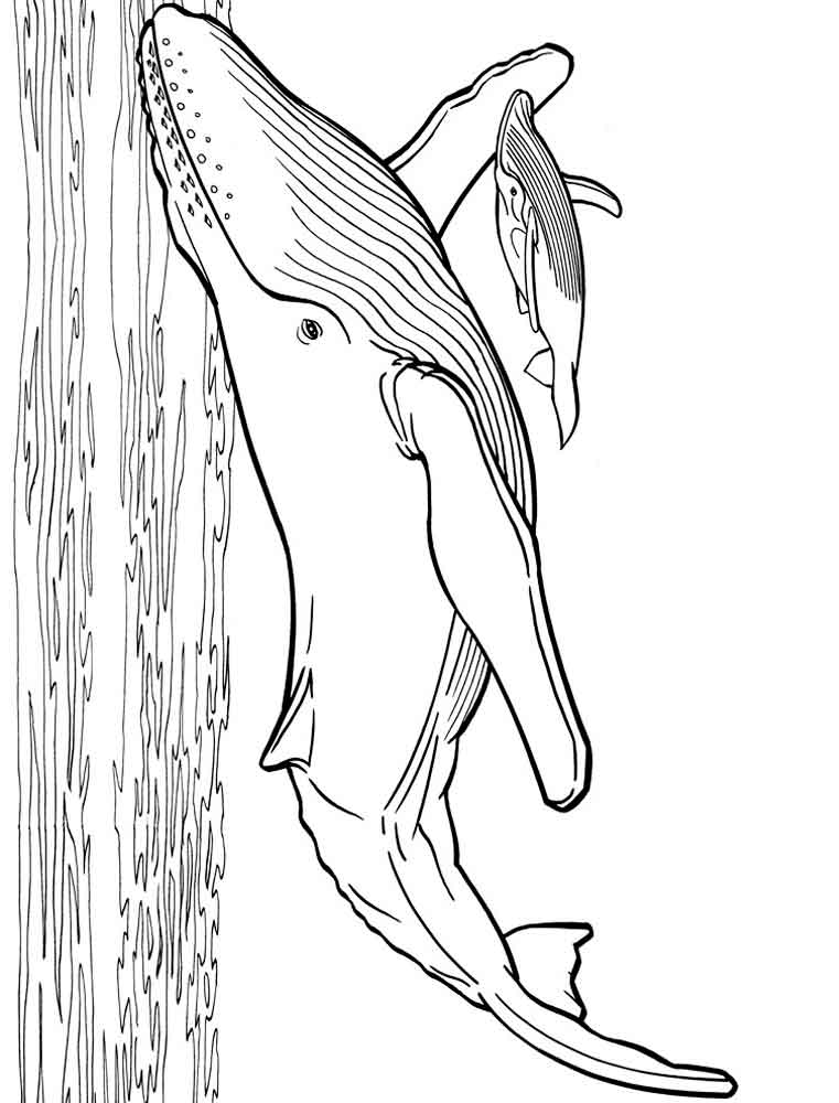 Whales coloring pages Download