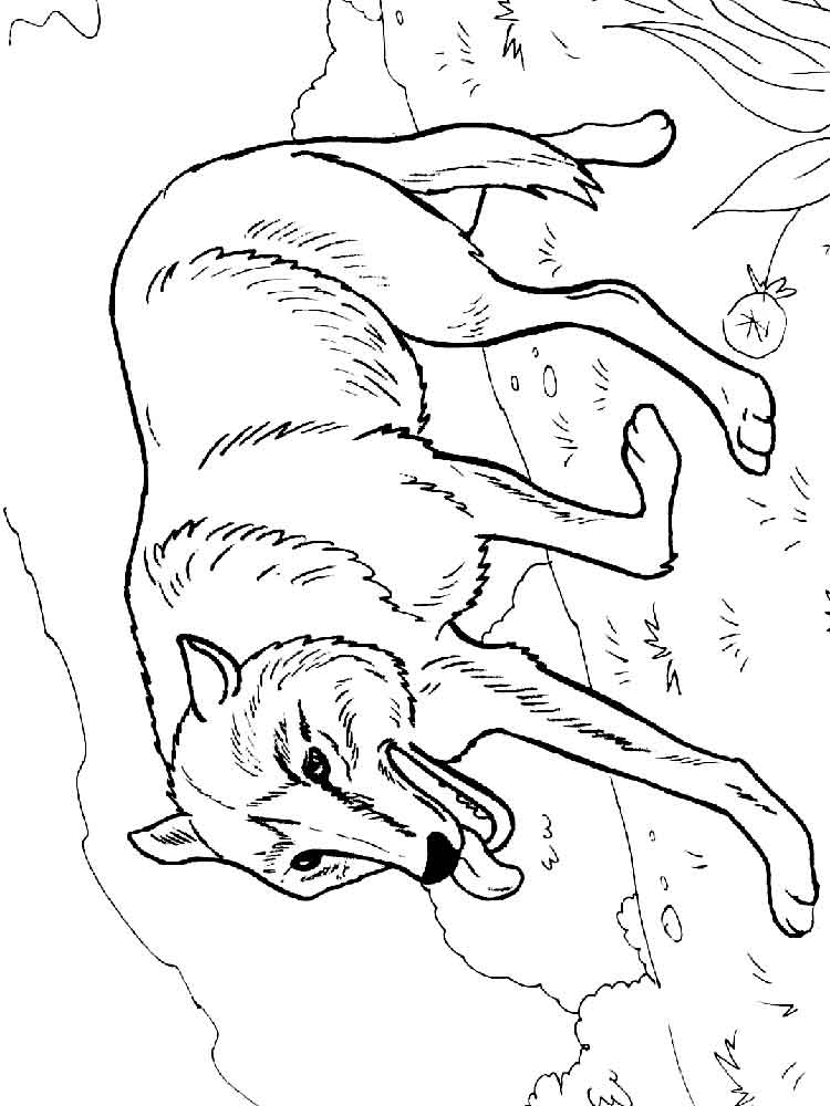 Wolf coloring pages Download and print wolf coloring pages