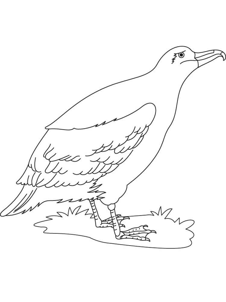 Albatross Coloring Pages Download And Print Albatross