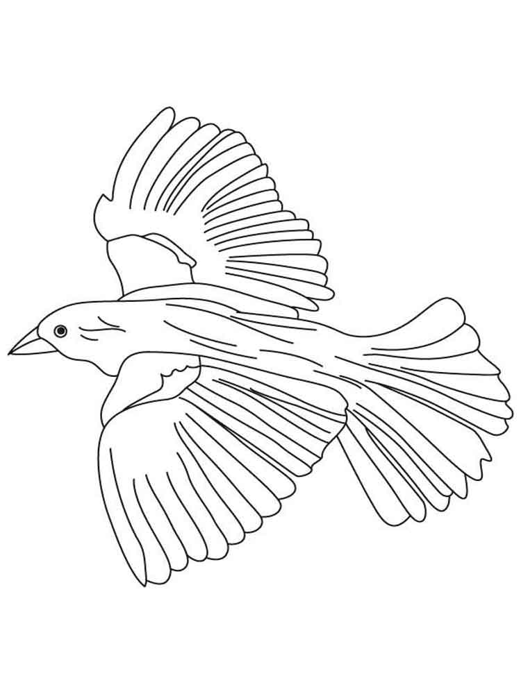 Blackbird coloring pages Download and print Blackbird