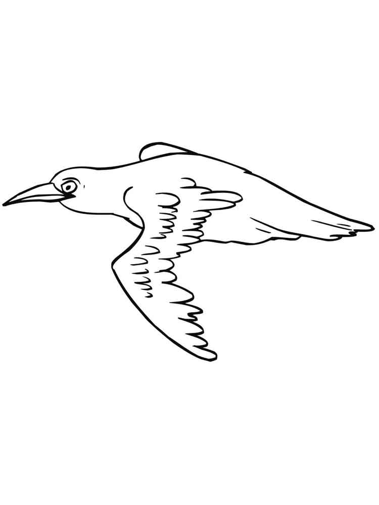 Blackbird coloring pages Download