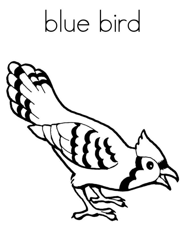 Bluebird coloring pages download and print bluebird for Coloring page of a bird