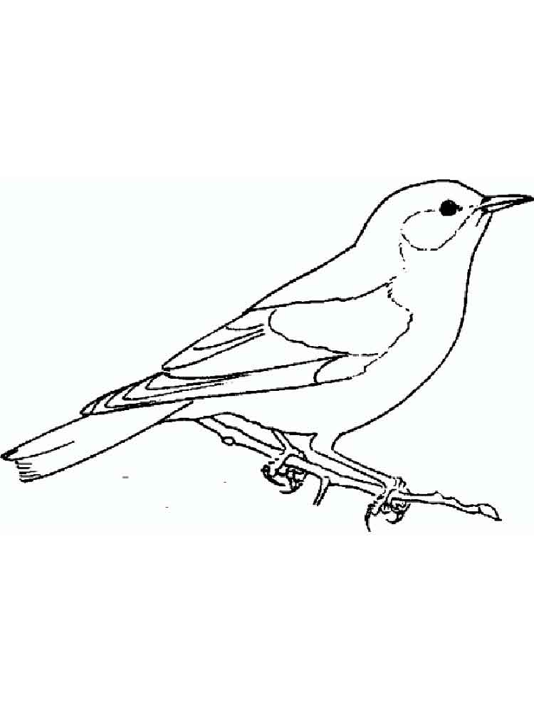 Bluebird coloring pages Download