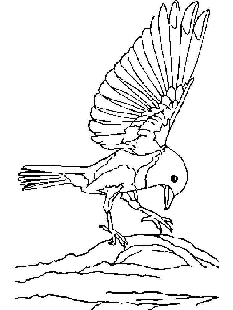 Bluebird coloring pages download and print bluebird for Coloring pages for kids birds