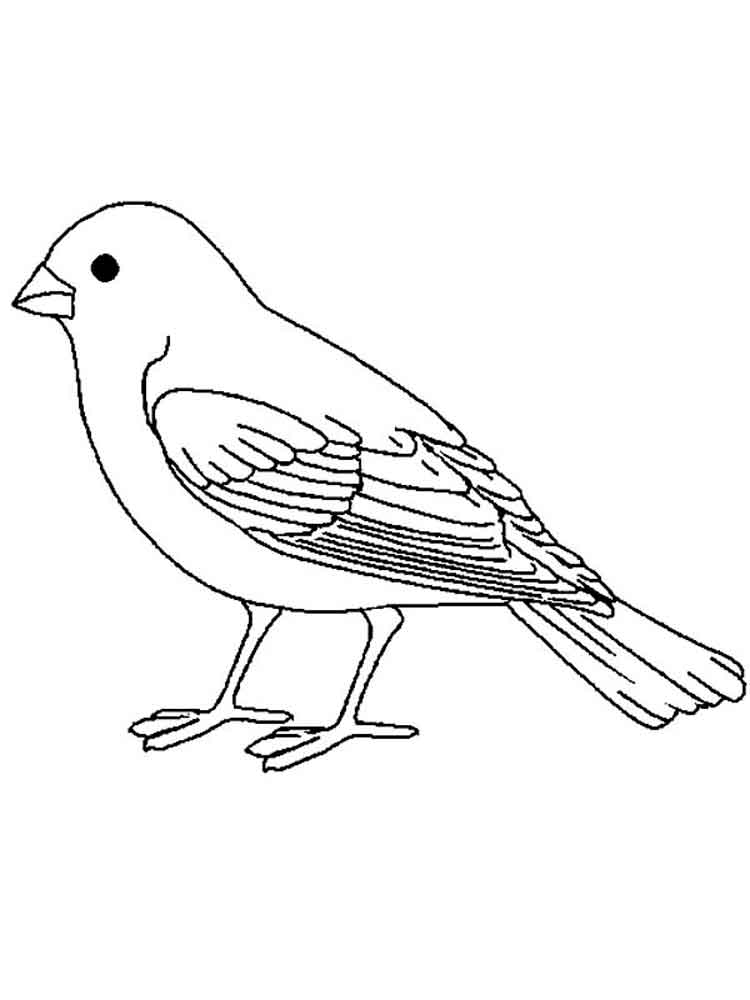 Canary Birds Coloring Pages 1