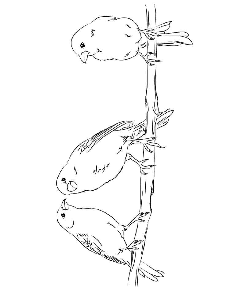 canary bird coloring pages - photo#17