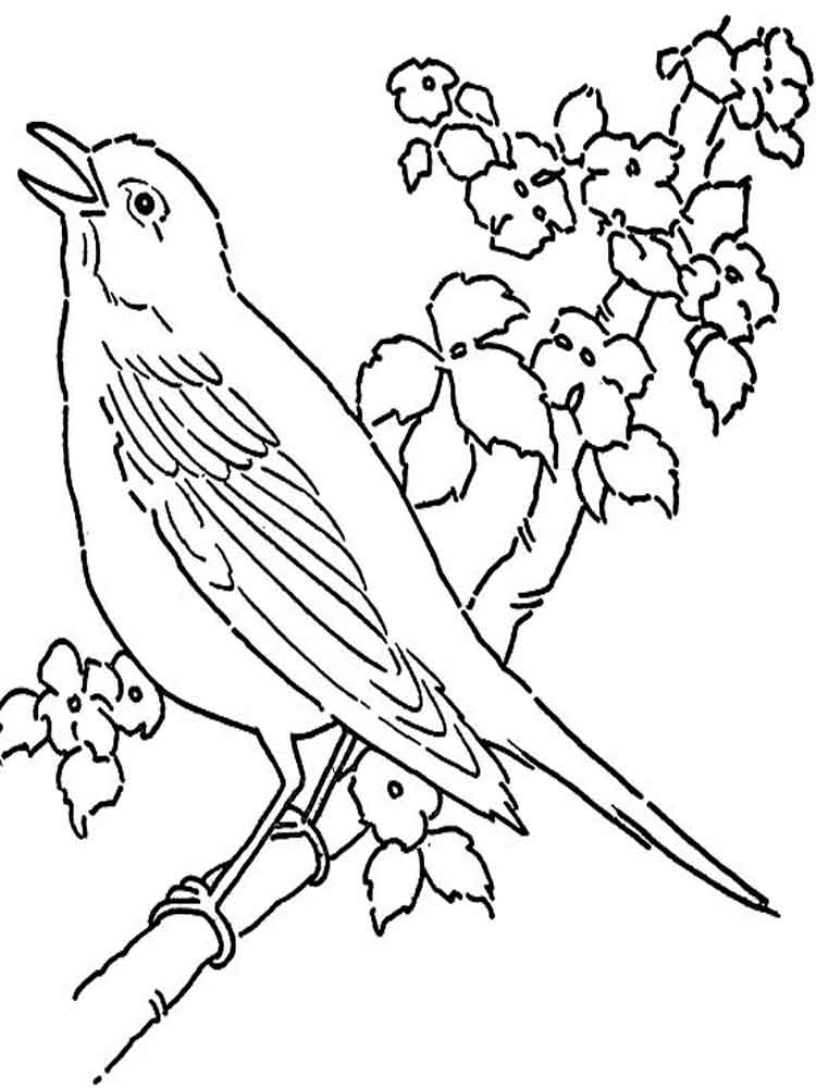 Canary Birds Coloring Pages 3