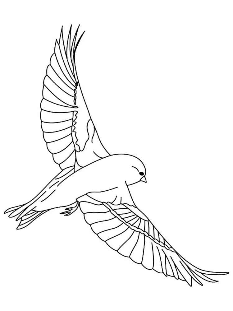 Canary Coloring Pages Download And Print Canary Coloring