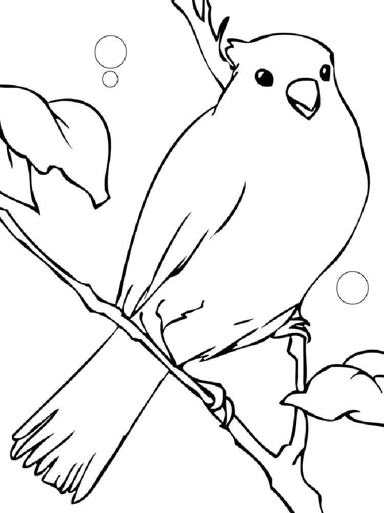 Canary Birds Coloring Pages 5