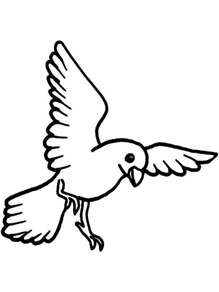 Canary coloring pages Download