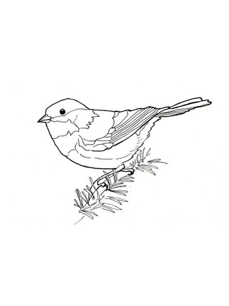 chickadee bird coloring pages - photo#15
