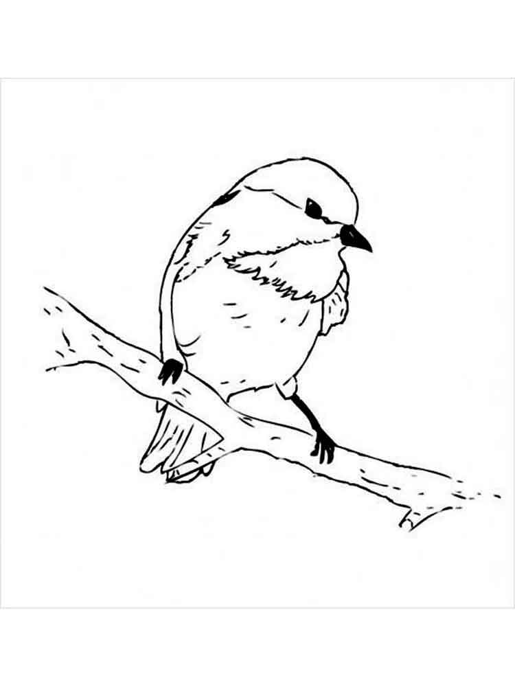 chickadee bird coloring pages - photo#6