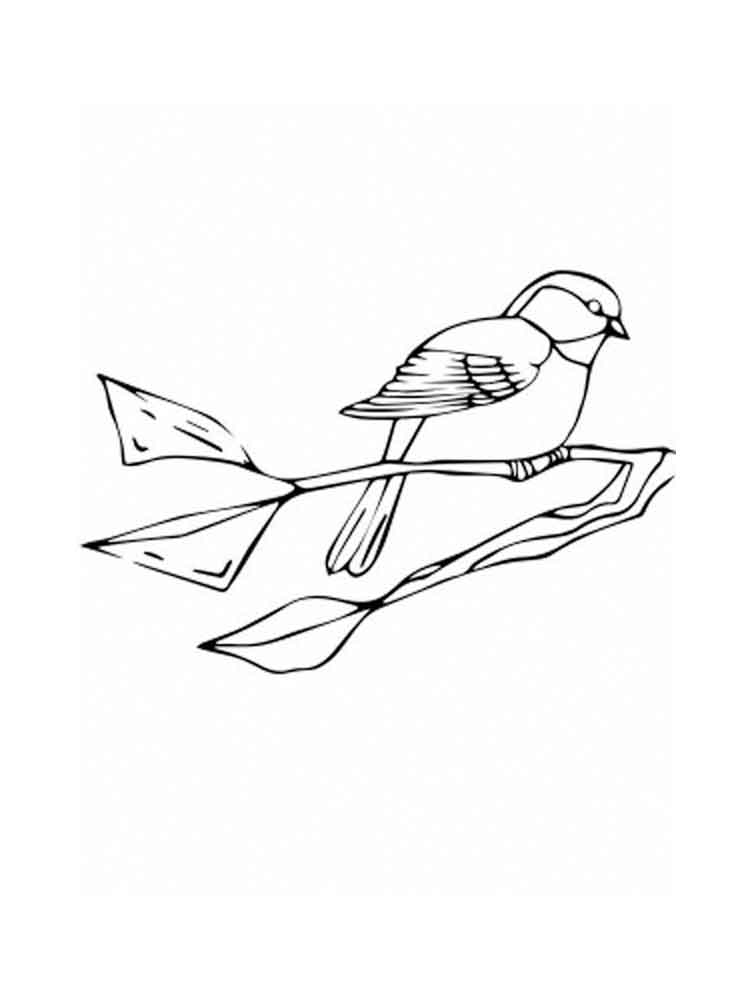 chickadee bird coloring pages - photo#17