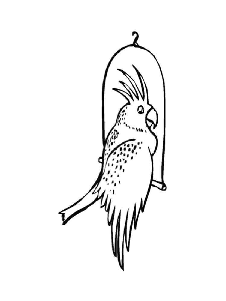 Cockatoo coloring pages Download