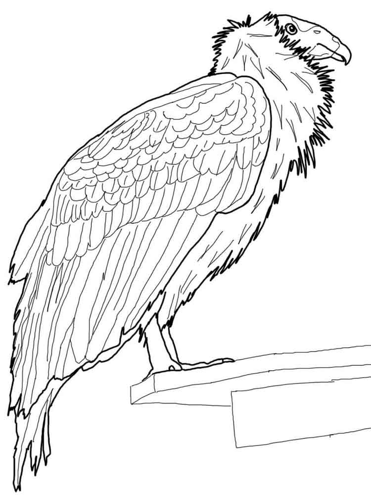 Condor coloring pages Download