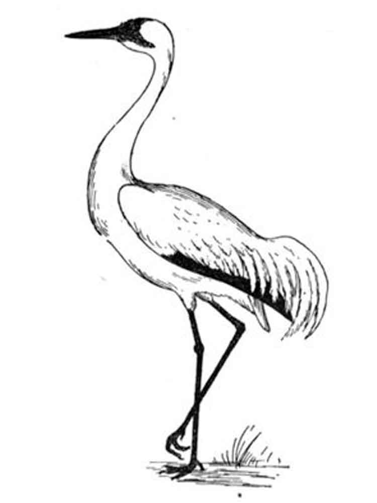 Crane Coloring Pages Download And Print Crane Coloring Pages