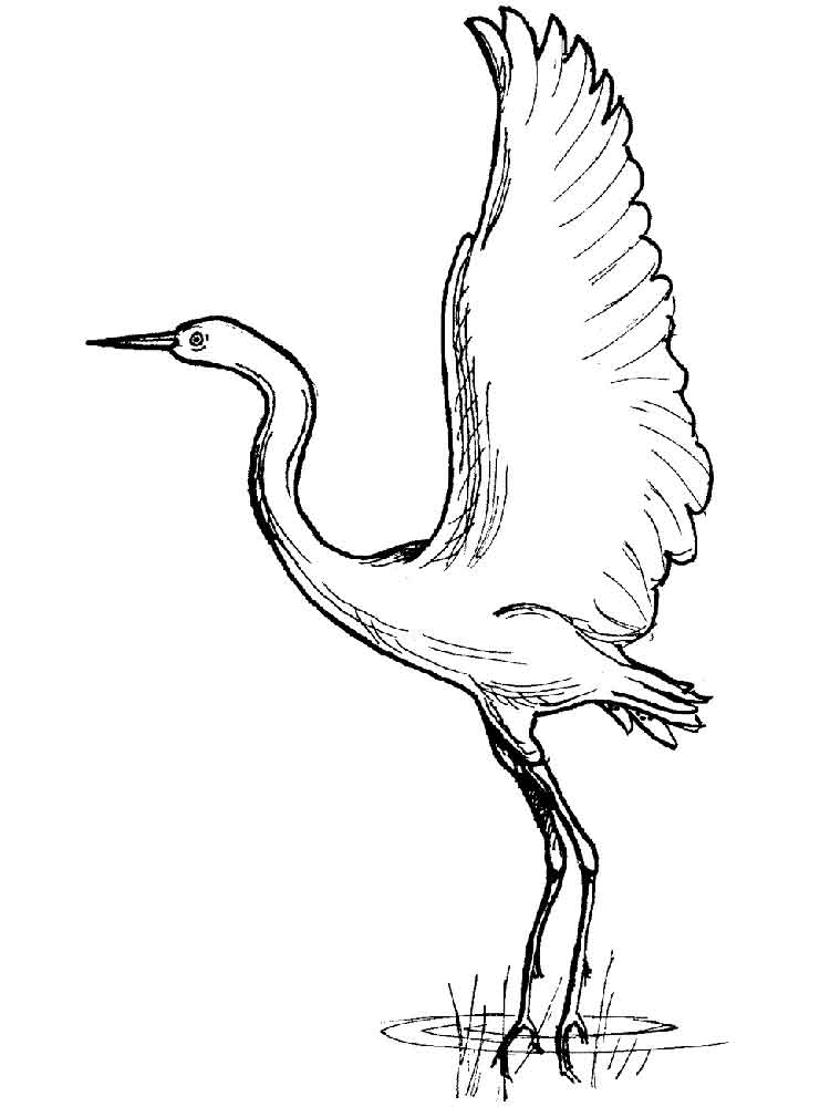 Crane coloring pages Download