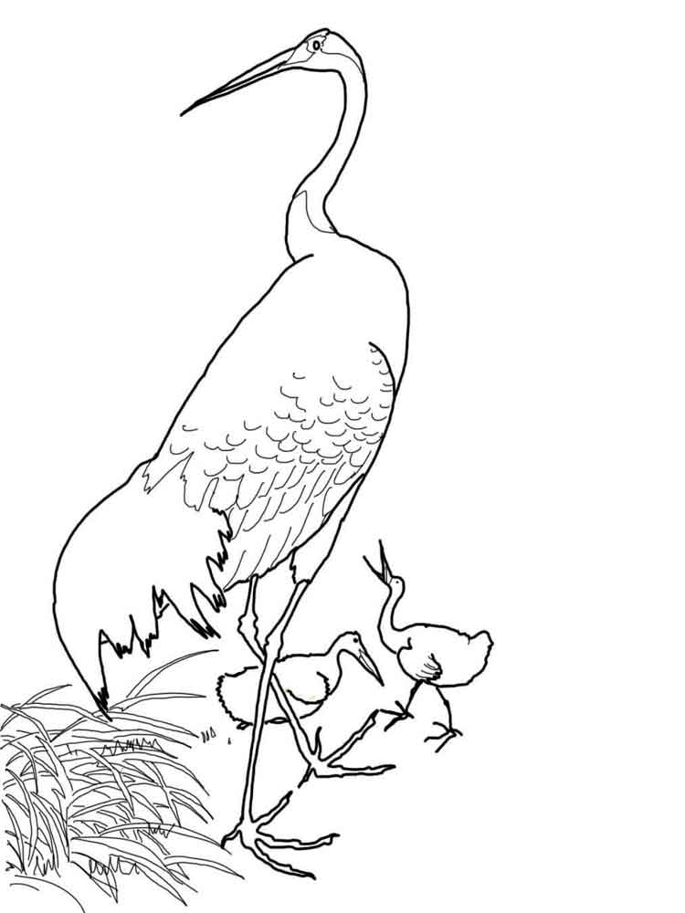 Line Drawings Of Endangered Animals : Crane coloring pages download and print