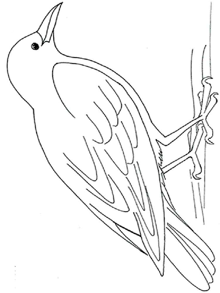 Crows Birds Coloring Pages 2