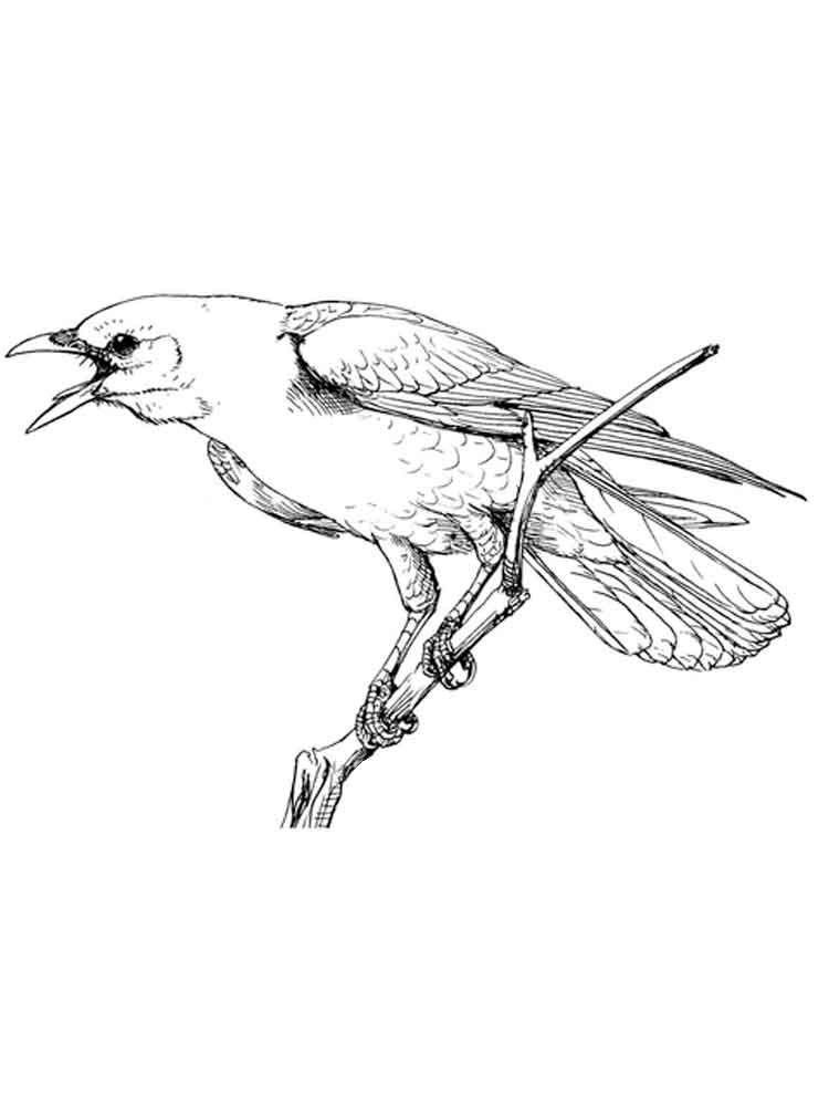 Crows Birds Coloring Pages 4