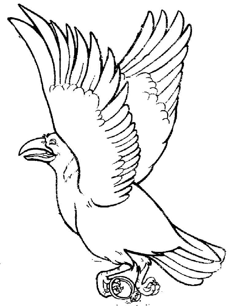 crows birds coloring pages 7