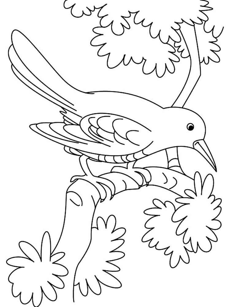 Cuckoo coloring pages Download