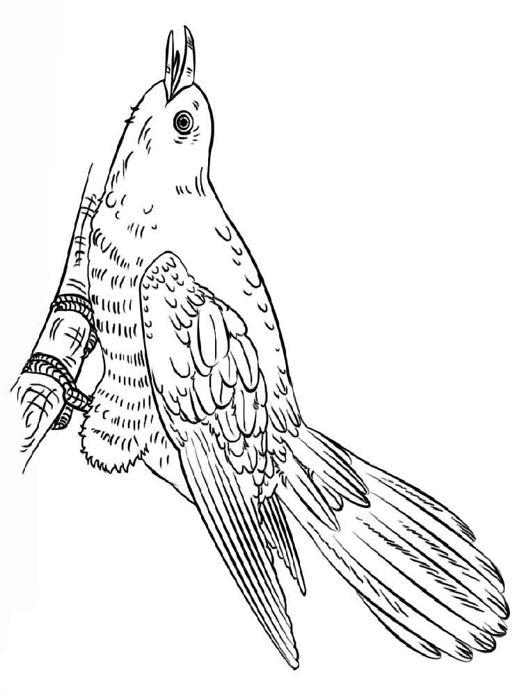 Cuckoos Birds Coloring Pages 4