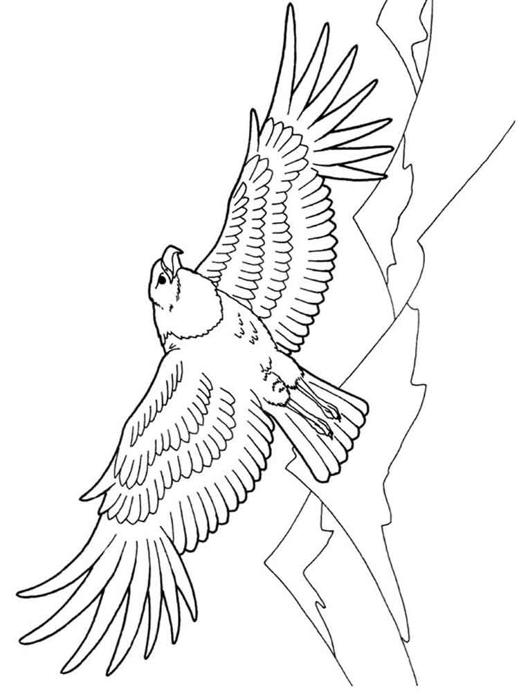Eagle coloring pages. Download and print Eagle coloring pages