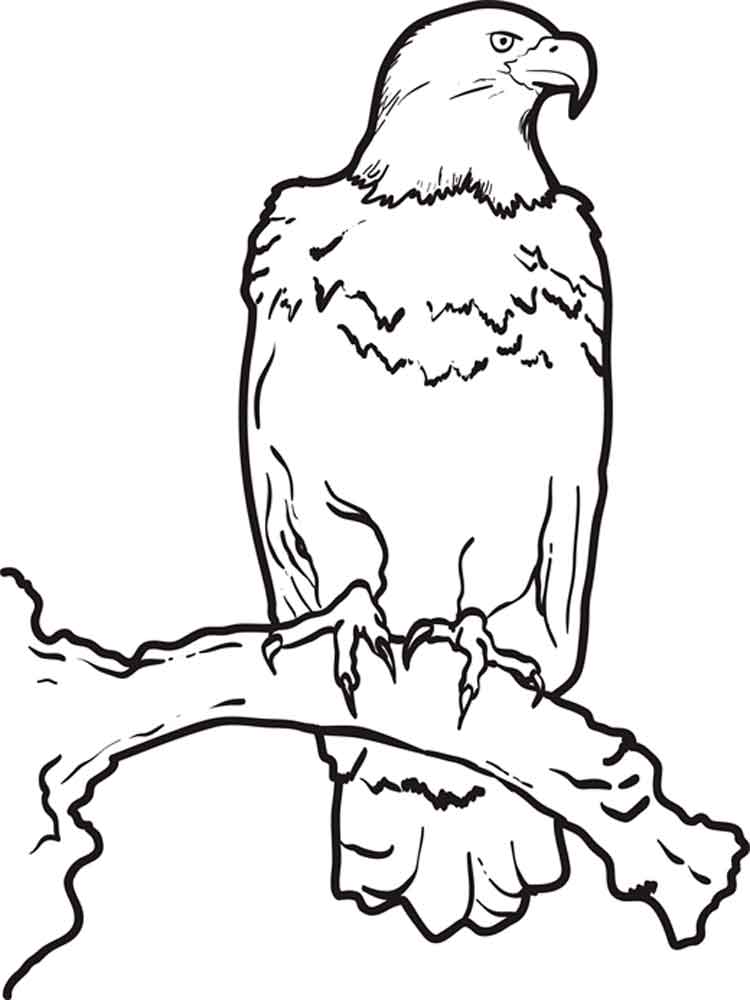 Eagle Birds Coloring Pages 7