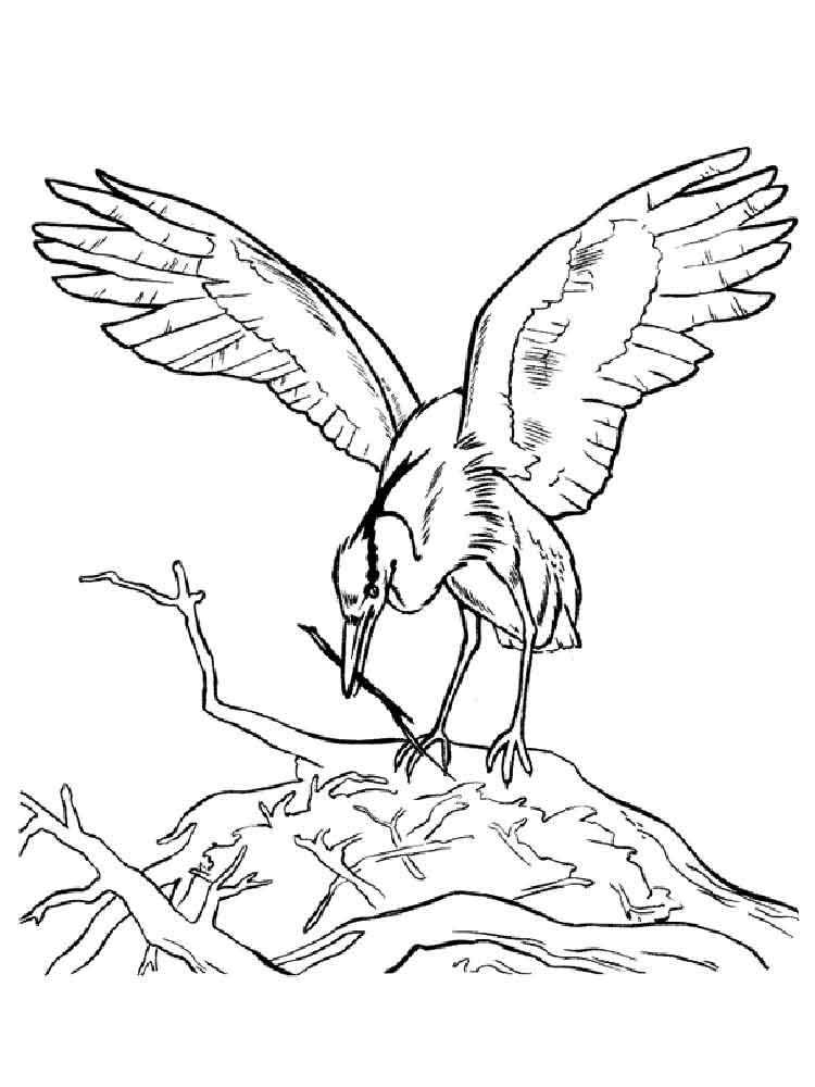 Egrets coloring pages Download