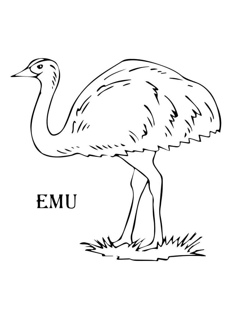 Emu Coloring Pages. Download And Print Emu Coloring Pages