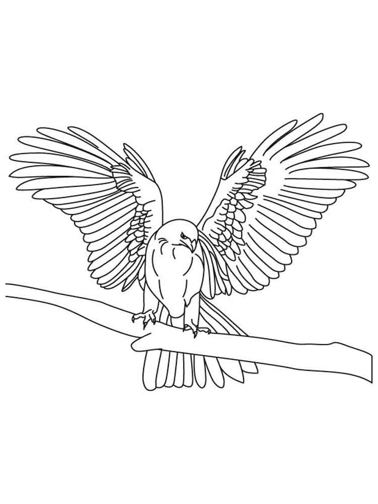 Falcons coloring pages Download