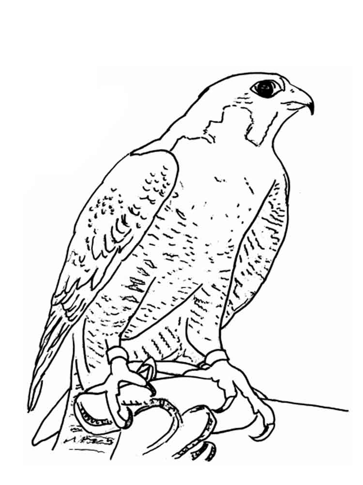Falcons Birds Coloring Pages 10